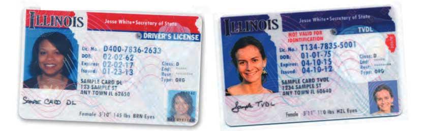 Illinois Temporary Visitor Driver's License