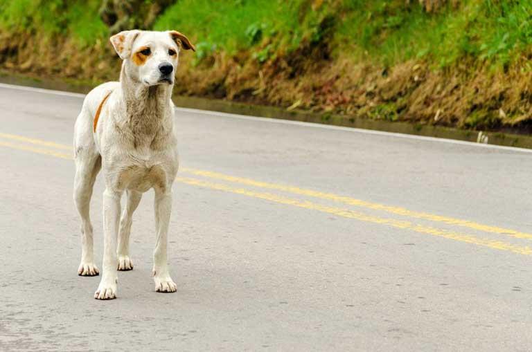 Dog on the Highway - Copyright: Jesse Kraft
