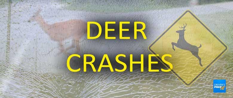 Deer crashes - copyright: driversprep.com
